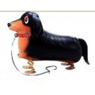 Pet Dachshund Dog