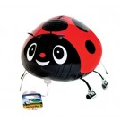 Red Pet Ladybird